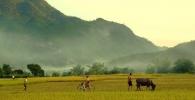 Mai Chau Valley Ricefields